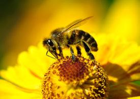ALDI angażuje się w ochronę pszczół w miastach.